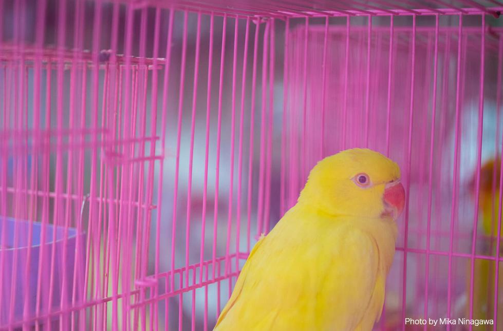 -Bird-Garden