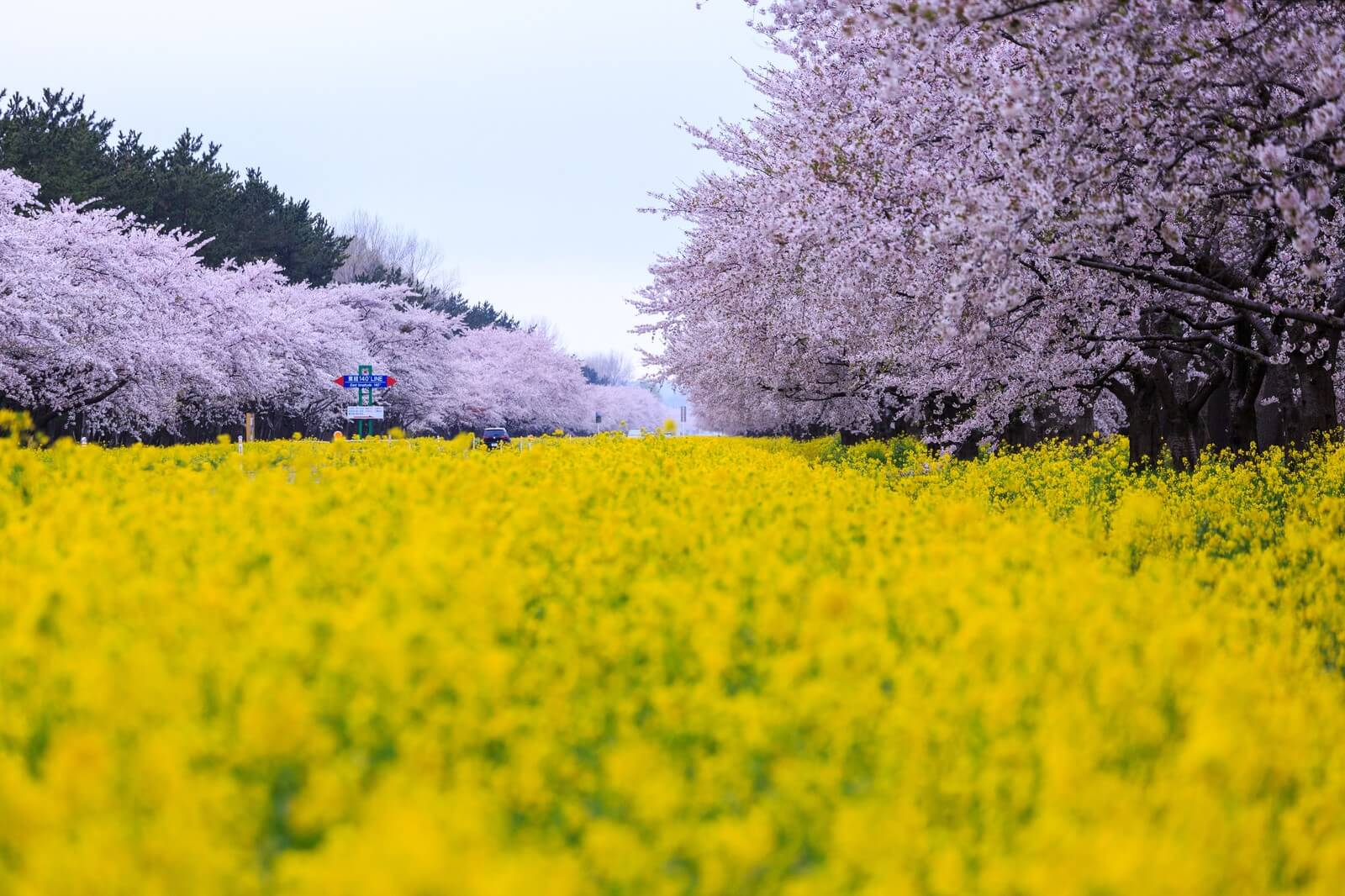 top spring festivals in japan events in march april may 2018