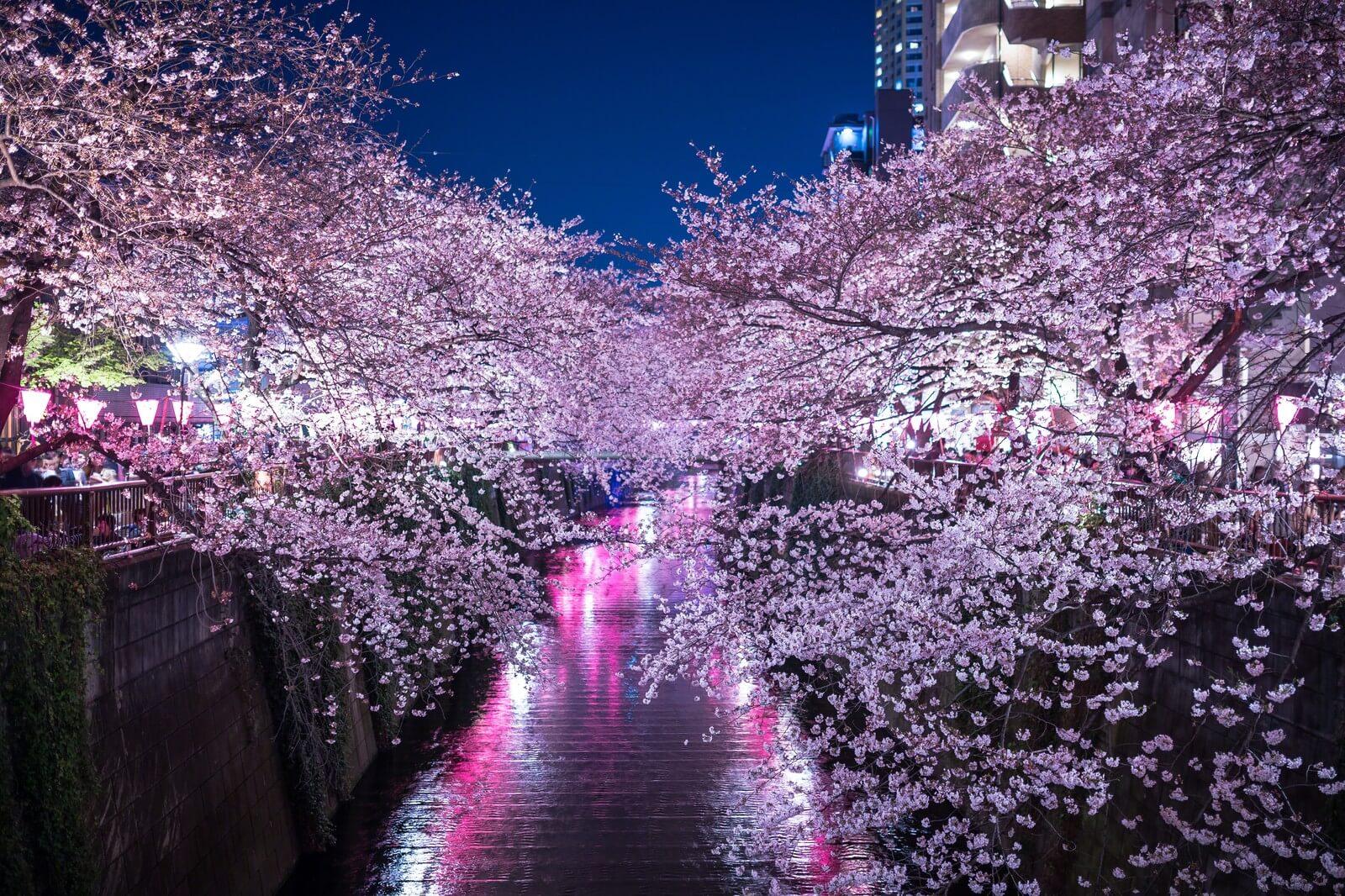 夜桜が美しい!東京都内の夜桜&ライトアップスポット7選 Moshi Moshi Nippon もしもしにっぽん