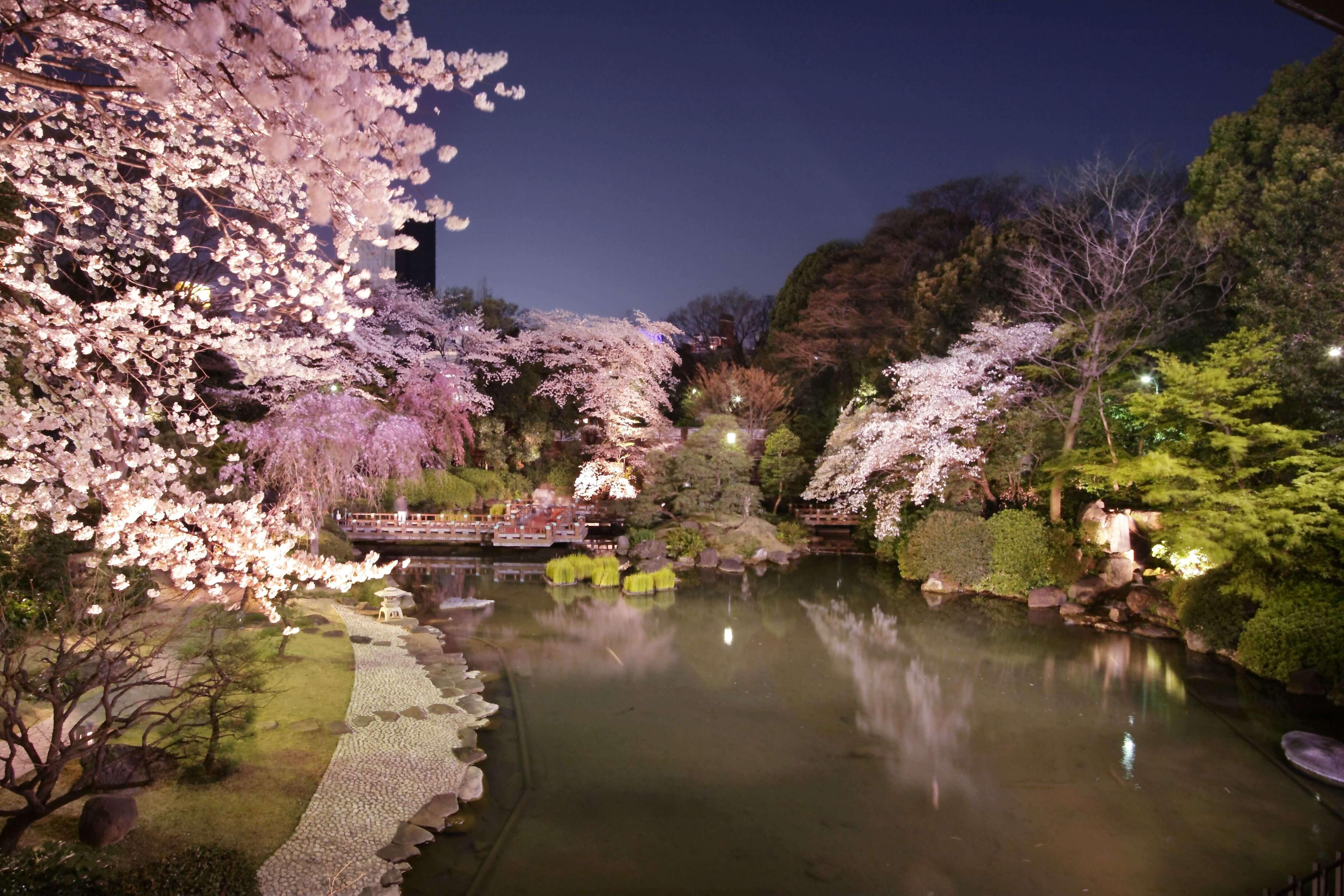 日本庭園でお花見が楽しめるレストラン『神楽』原宿