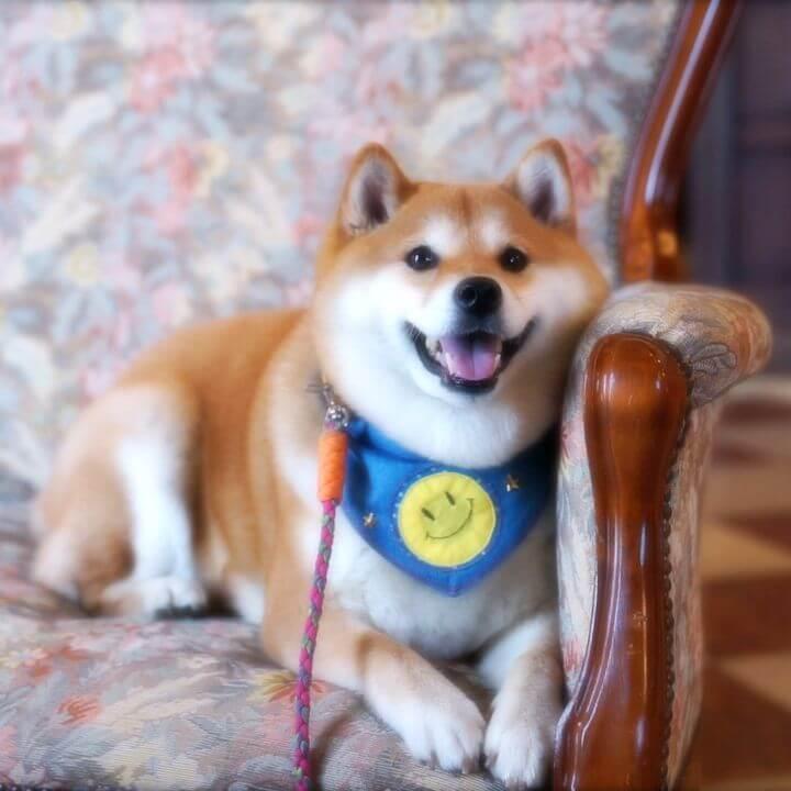 柴犬・ハナの旅行動画公開4