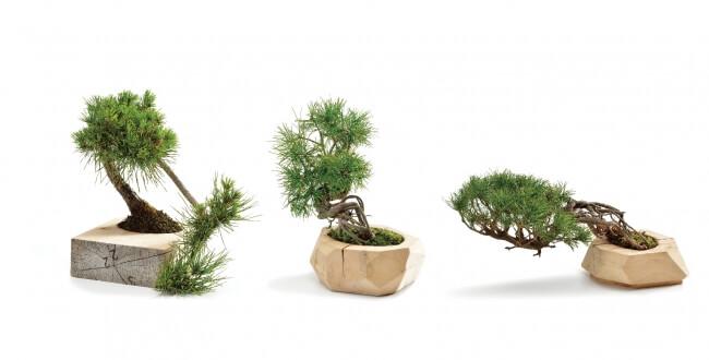 盆栽のブランド「~非盆(HIBON)~」2