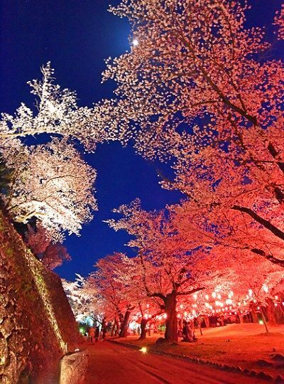信州小諸「桜まつり」5