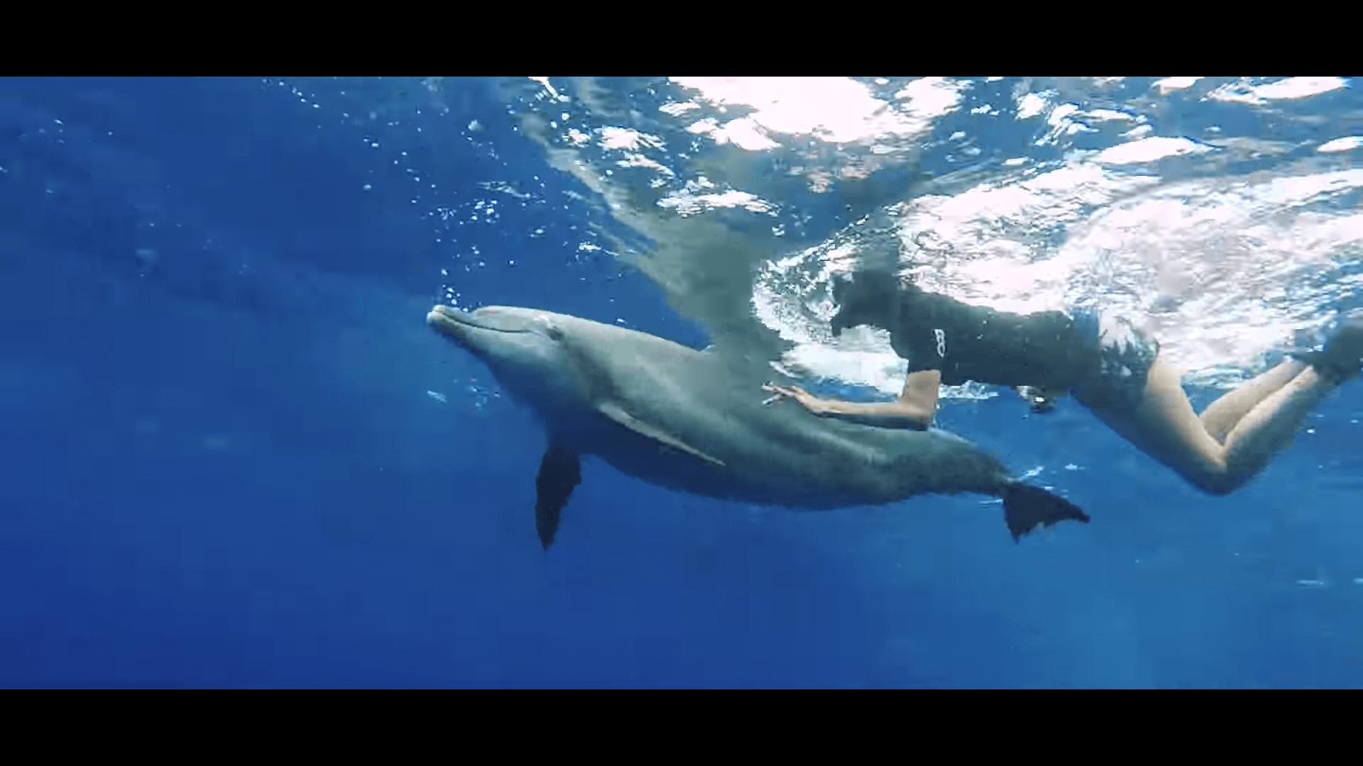 東京の世界自然遺産・小笠原を動画でチェック『Tokyo's hidden islands』3