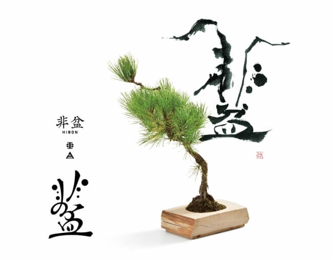 """HIBON"" -startup of new type of miniature potted tree brand"