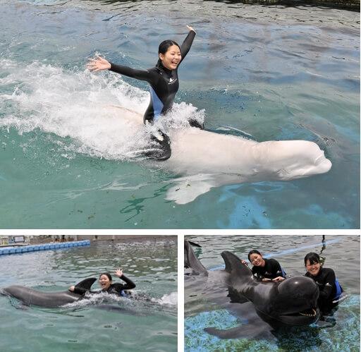 横浜・八景島シーパラダイス. シロイルカ・イルカ・クジラとおよごうjpg