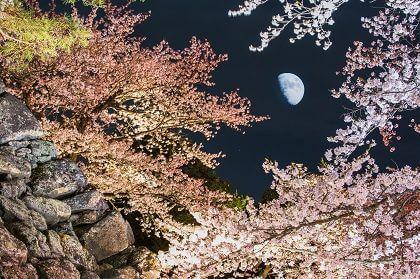 信州小諸「桜まつり」3