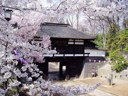 信州小諸「桜まつり」2