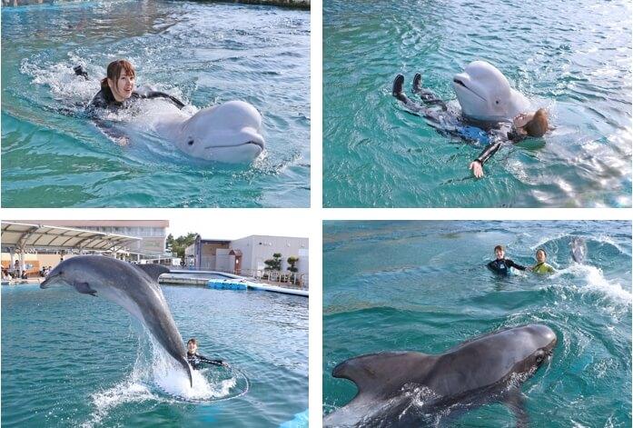 シロイルカ・イルカ・クジラとおよごう