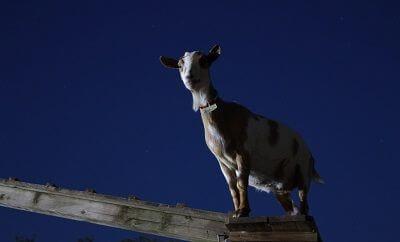 成田ゆめ牧場 ホタルの夕べ4