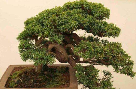 日本酒ツアー VELTRA 川越 kawagoe 盆栽 bonsai