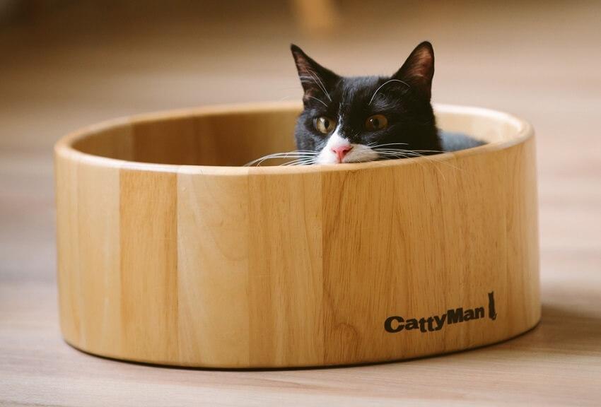「江戸ねこ茶屋」 ネコ
