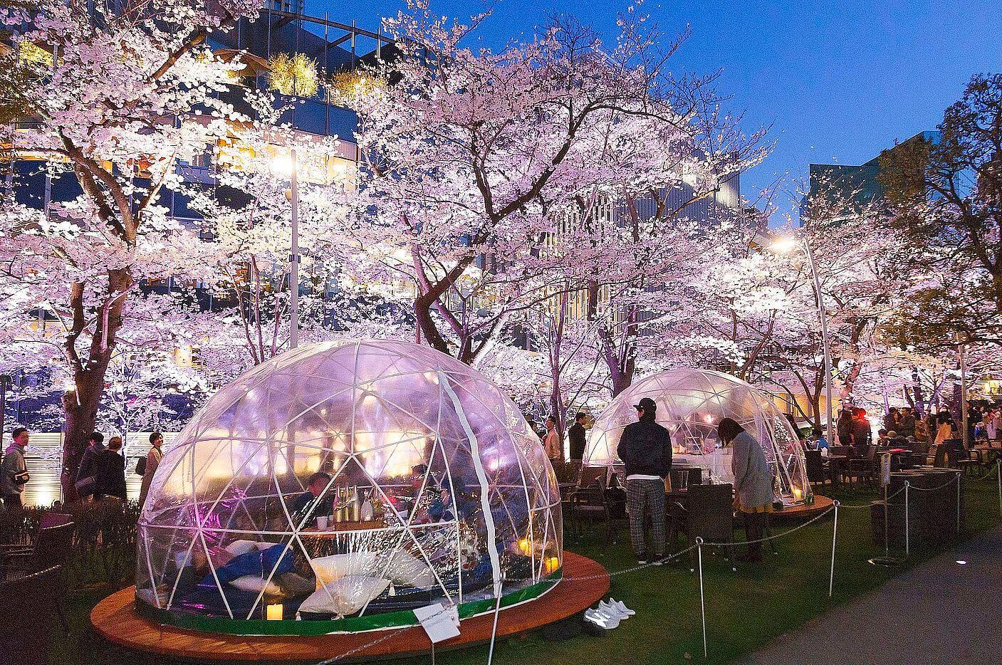 桜フェスティバル 2019 nihonbashi sakura festival3