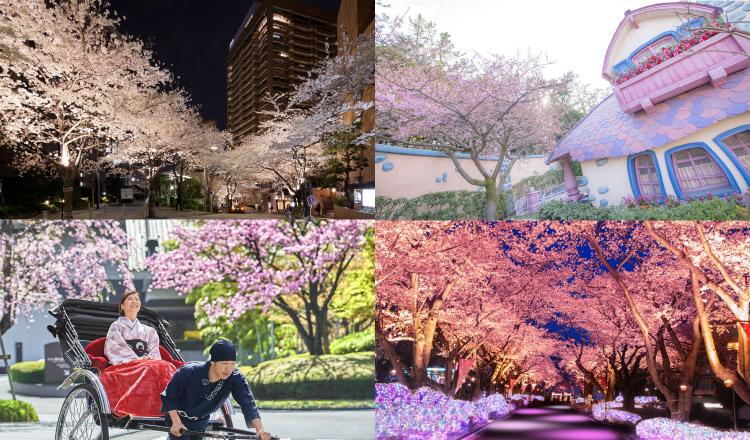 関東 オススメ 桜 お花見 東京 Tokyo-Cherry-blossoms-recommend