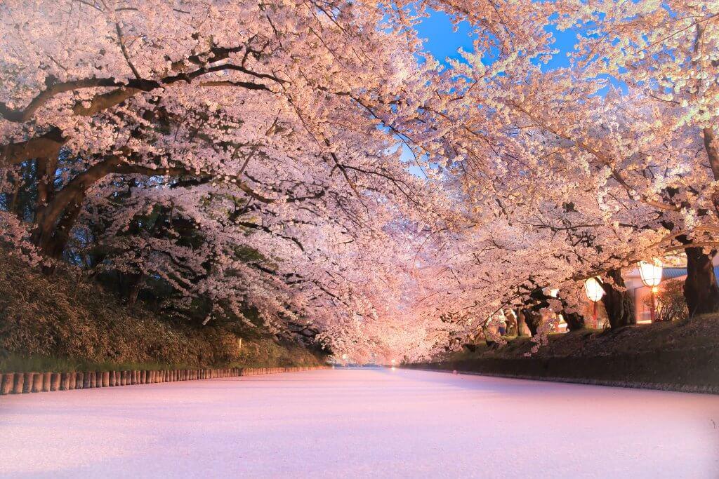 弘前さくらまつり Hirosaki Cherry Blossom Festival 桜 sakura2