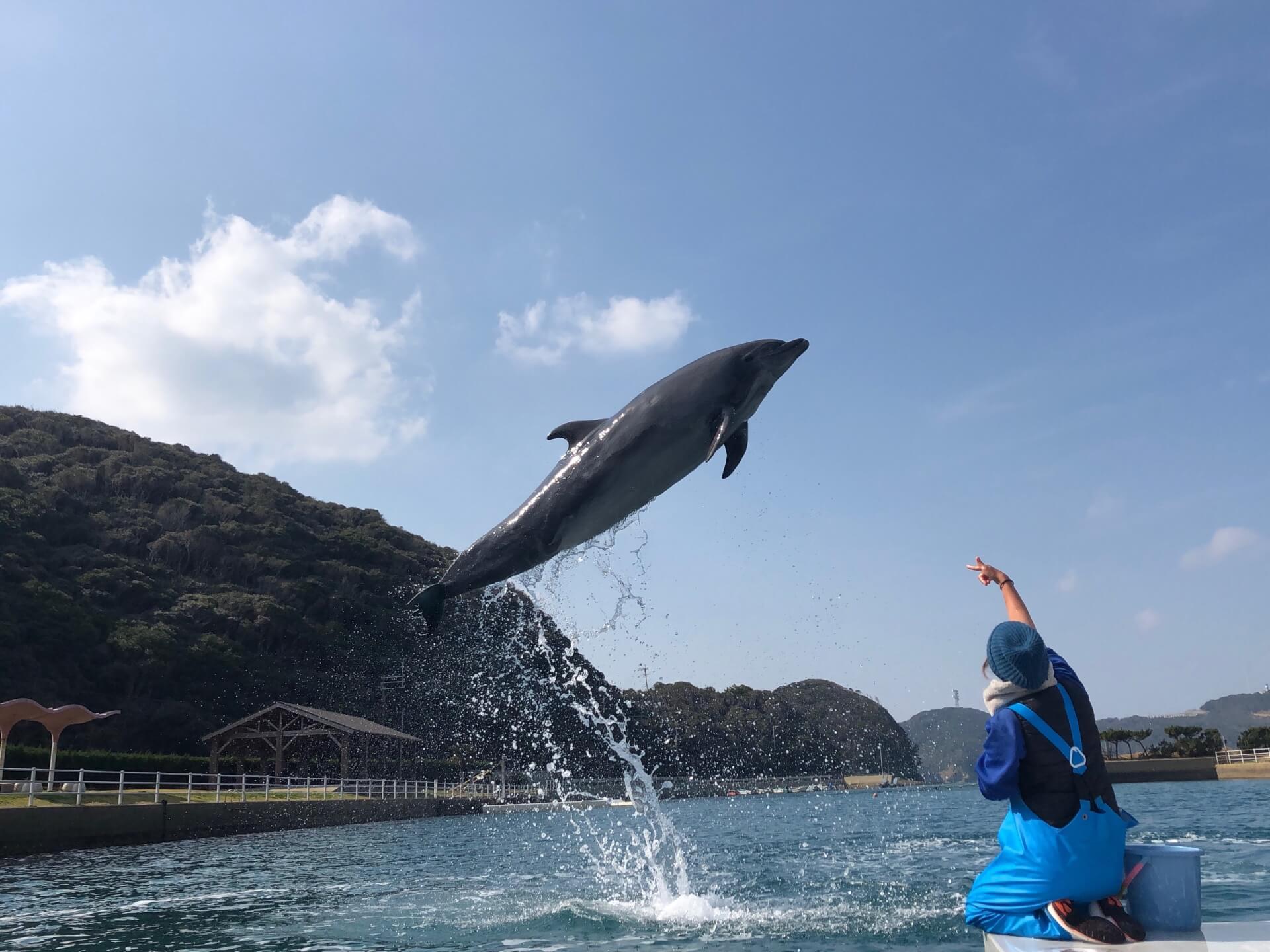 壱岐イルカパーク iki dolphin park3