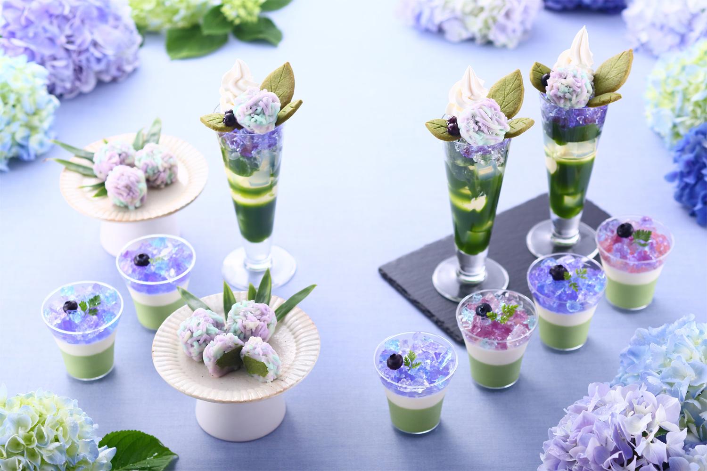 抹茶×紫陽花まつり2019 matcha hana matsuri img_184129_1