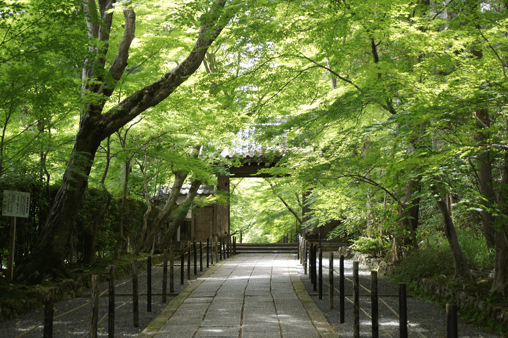 05_光明寺 京都 Kyoto