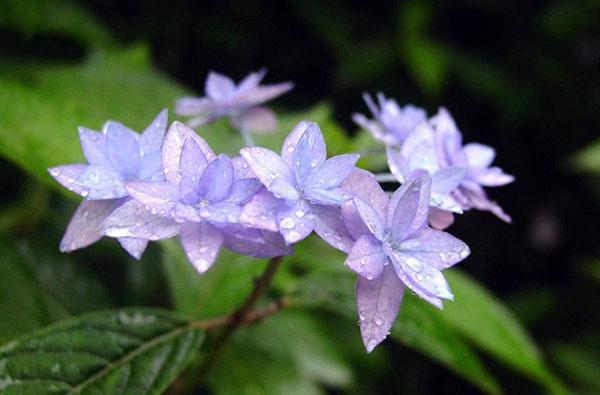 img_187175_1六甲高山植物園 rokko takayama shokubutuen