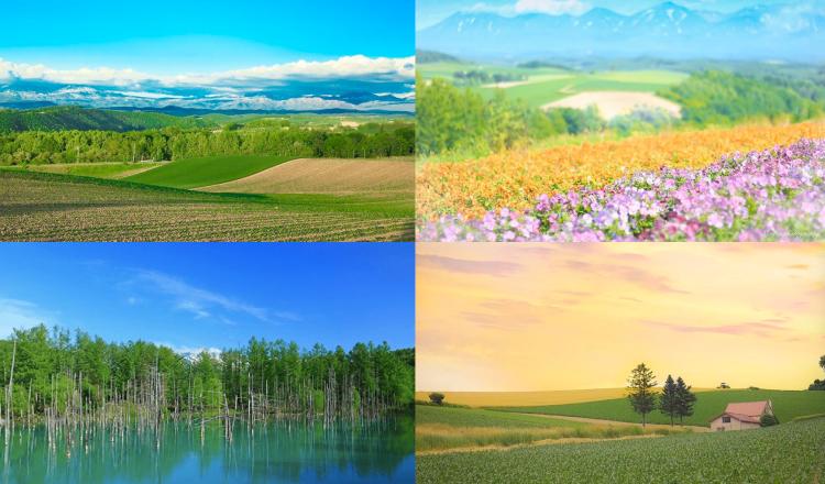 北海道 美瑛 Hokkaido-Biei-Sightseeing-観光 旅行 travel_top