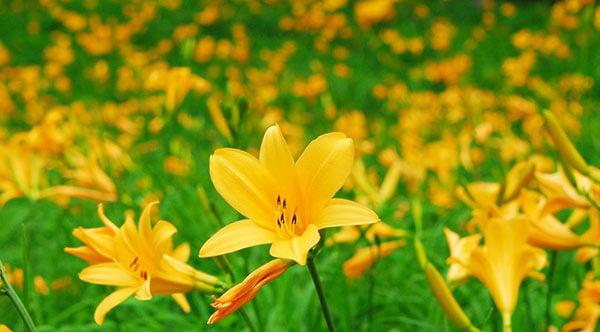 六甲高山植物園 神戸 観光 お花畑 Kobe sightseeing flowers