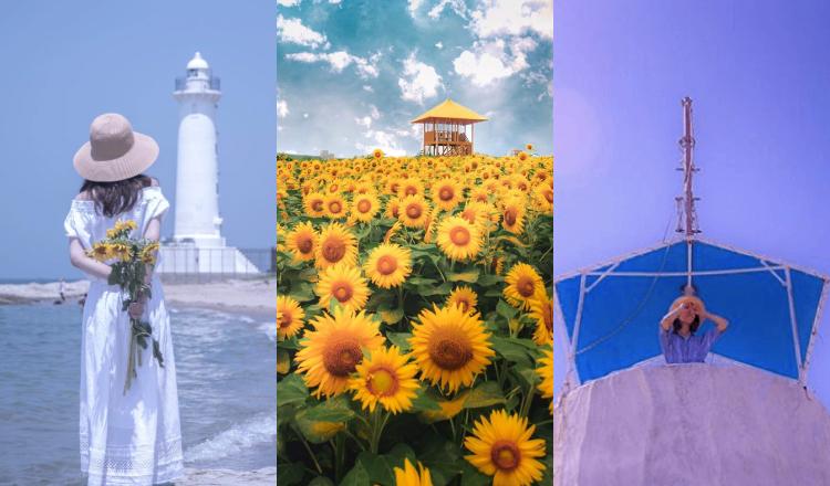 愛知牧場 ひまわり畑 観光スポット Aichi-Sunflower-sightseeing_Aichi-Farm-野間灯台 日間賀島