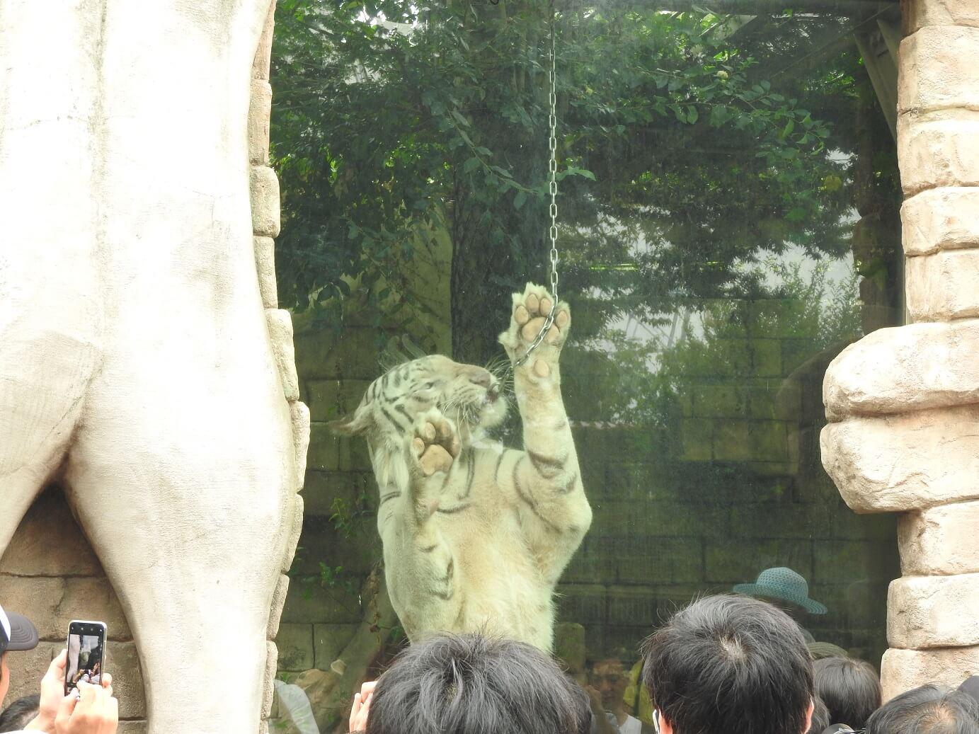 東武動物公園 Tobu animal zoo ホワイトガイド