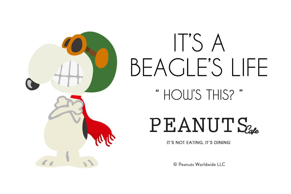 main-peanuts-cafe-%e3%83%94%e3%83%bc%e3%83%8a%e3%83%83%e3%83%84%e3%82%ab%e3%83%95%e3%82%a7-peanuts-diner-%e3%83%94%e3%83%bc%e3%83%8a%e3%83%83%e3%83%84%e3%83%80%e3%82%a4%e3%83%8a%e3%83%bc-%e5%a4%89-2-2