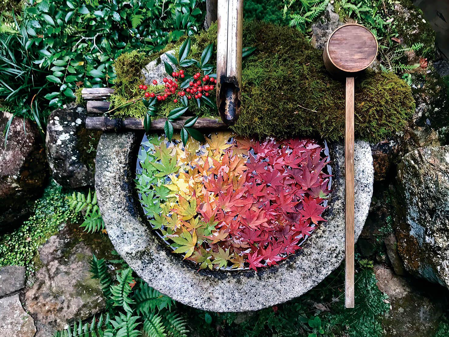 京都 柳谷観音 紅葉ウイーク Kyoto Sightseeing autumn colors 2