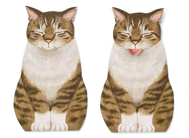 Brown Tabby and White Cat キジトラ白猫