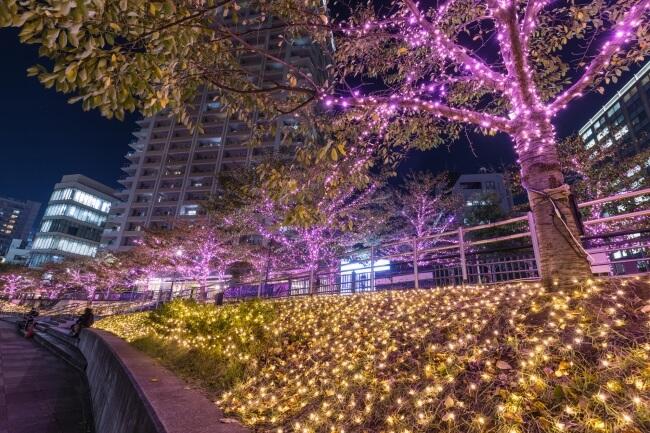 目黒川イルミネーション megurokawa illumination