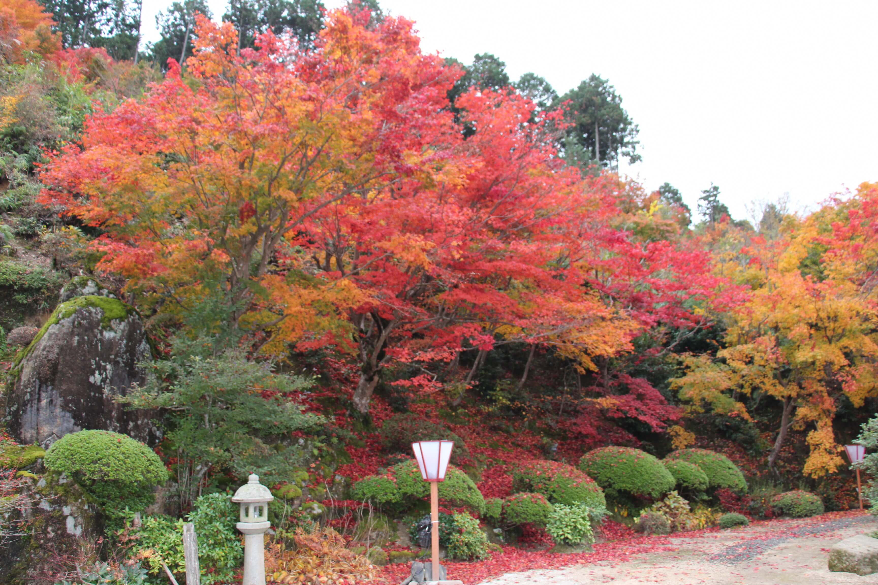 %e4%ba%ac%e9%83%bd-%e7%b4%85%e8%91%89-kyoto-autumn-leaves-%e6%85%88%e5%be%b3%e9%99%a2-2
