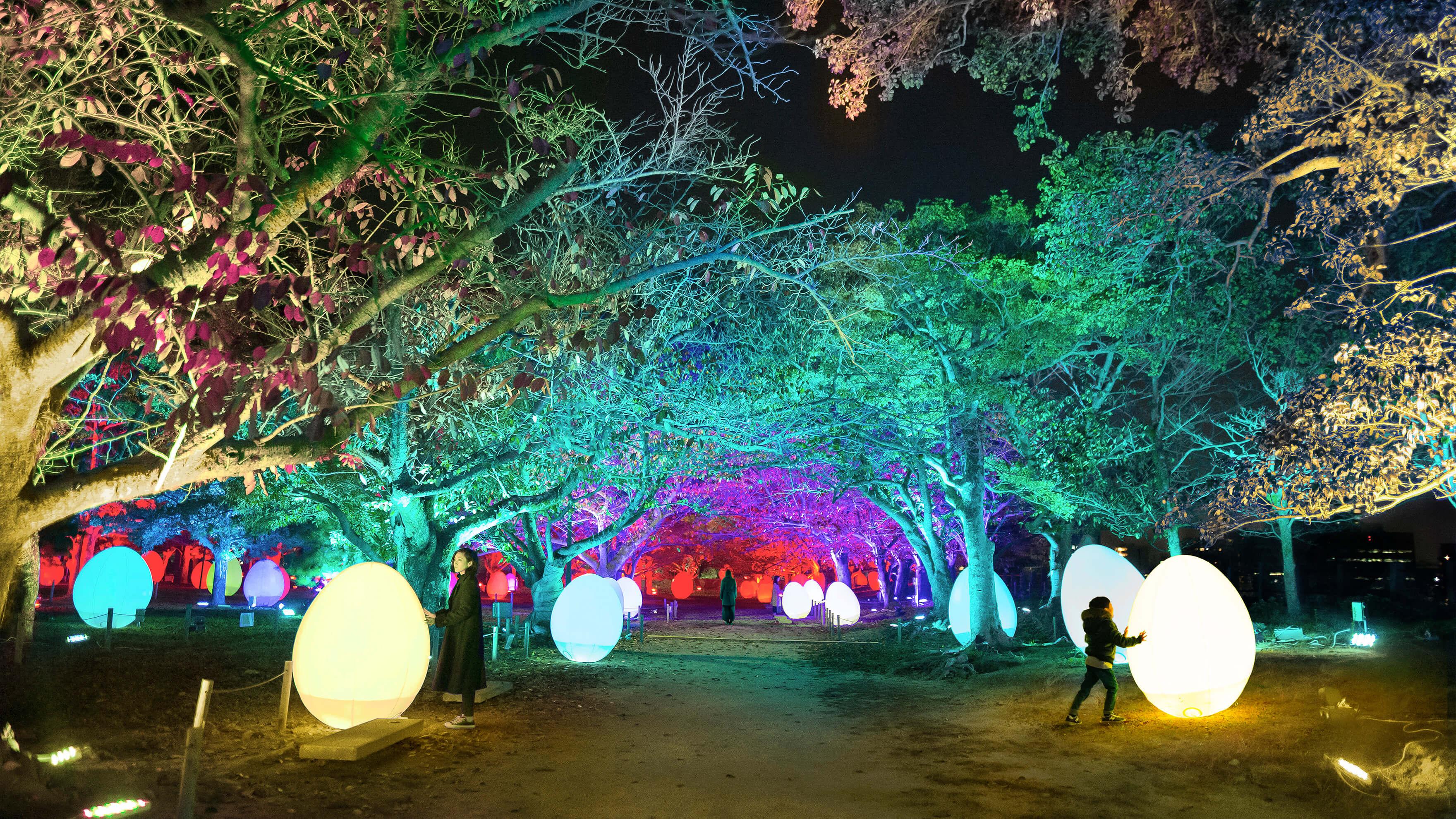 チームラボ 福岡城跡 光の祭 2019-2020 Light Festival in Fukuoka Castle Ruins