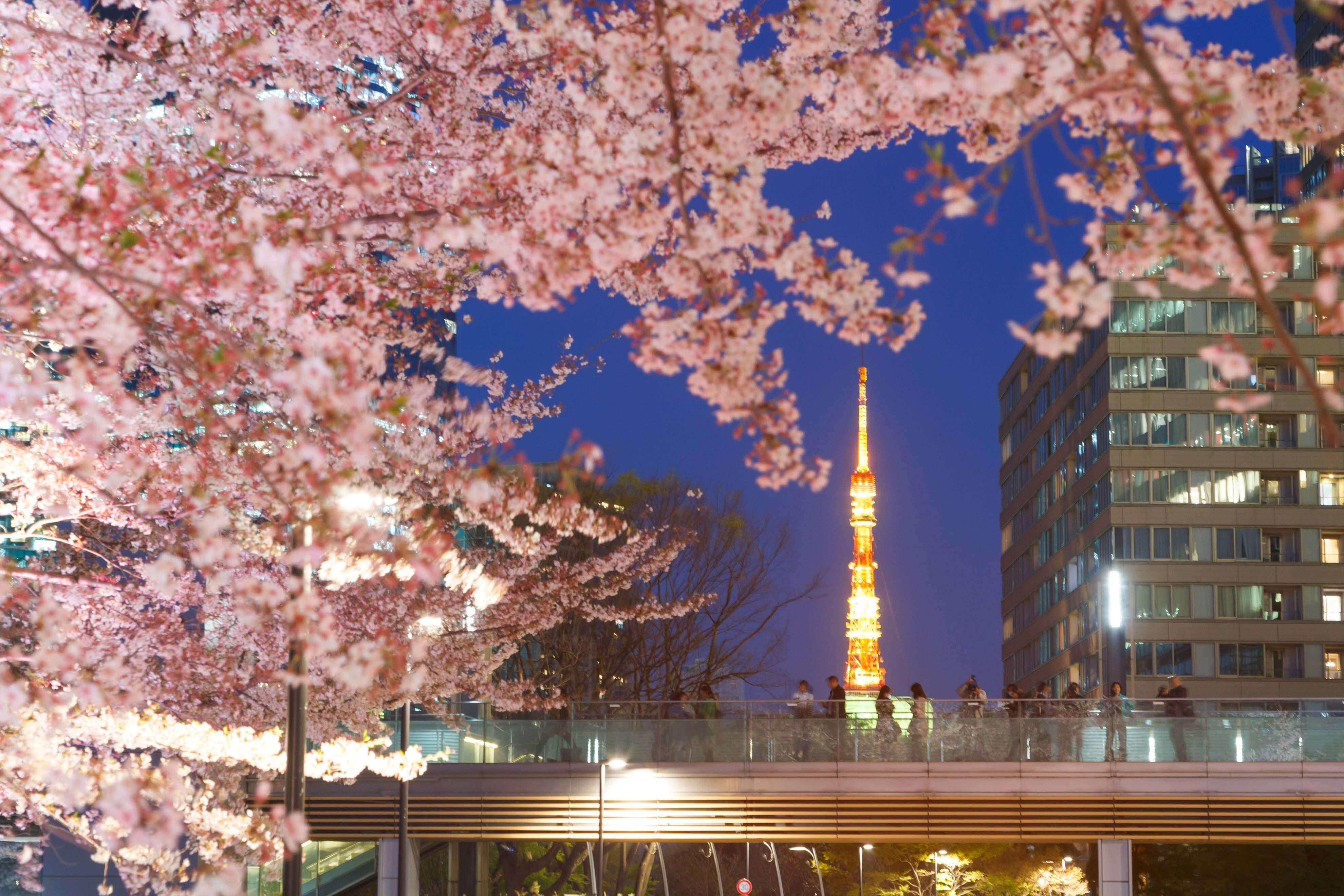 東京ミッドタウン 桜 イベント Sakura event MIDTOWN BLOSSOM 2020 6