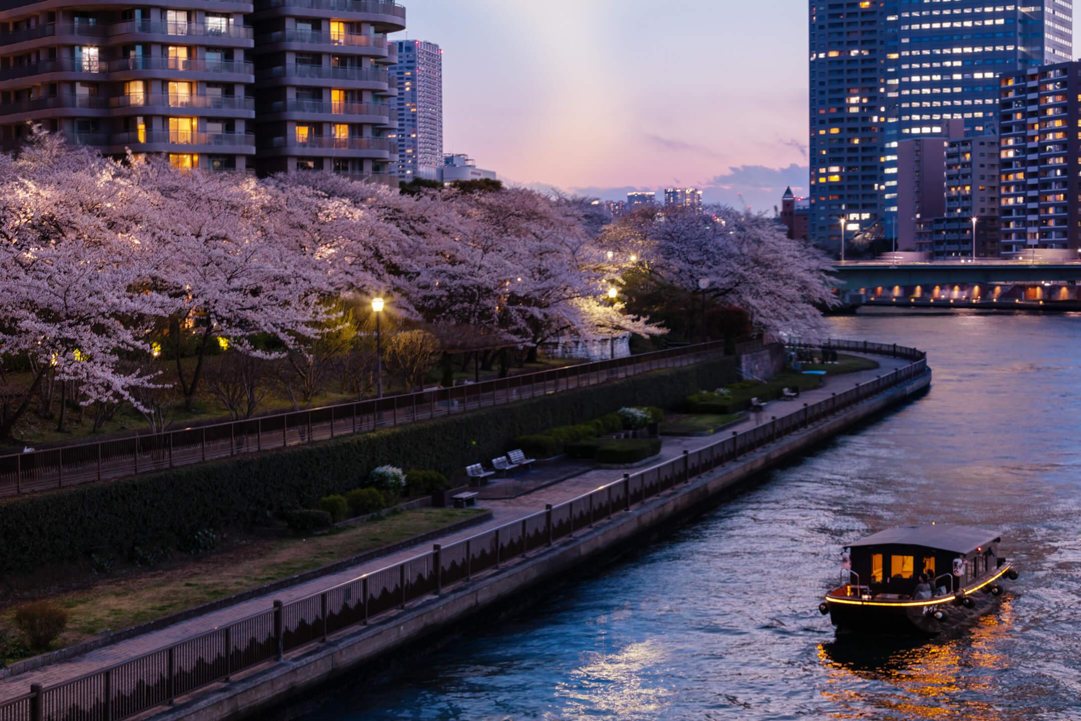 花見 桜 東京 隅田川 Sumida river Cherry blossom Tokyo 人力車 着物 Kimono_舟