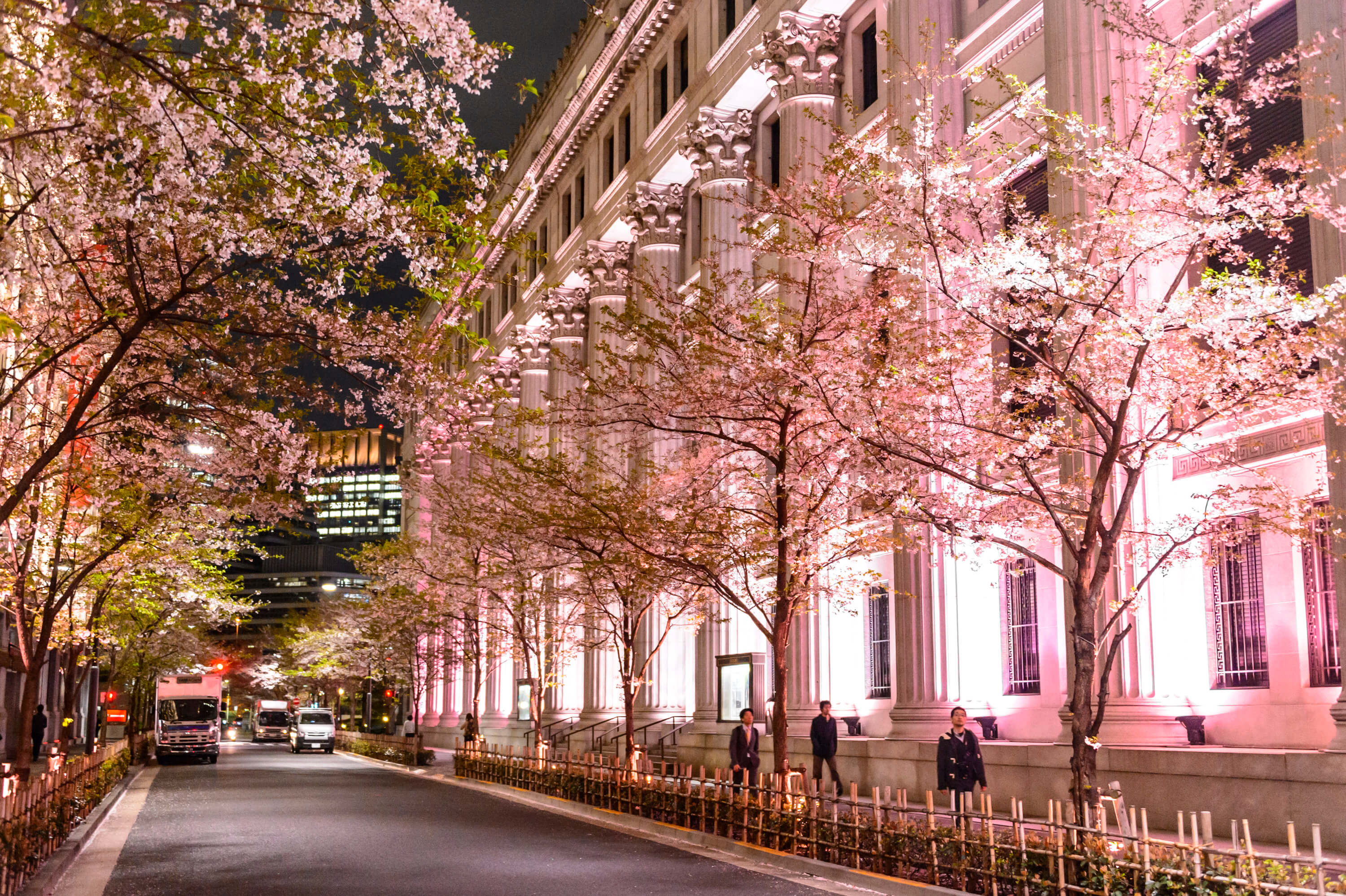 SAKURA FES NIHONBASHI_OFF TO MEET 日本橋 桜 フェス_Sakura Light Up_三井本館(過去写真)