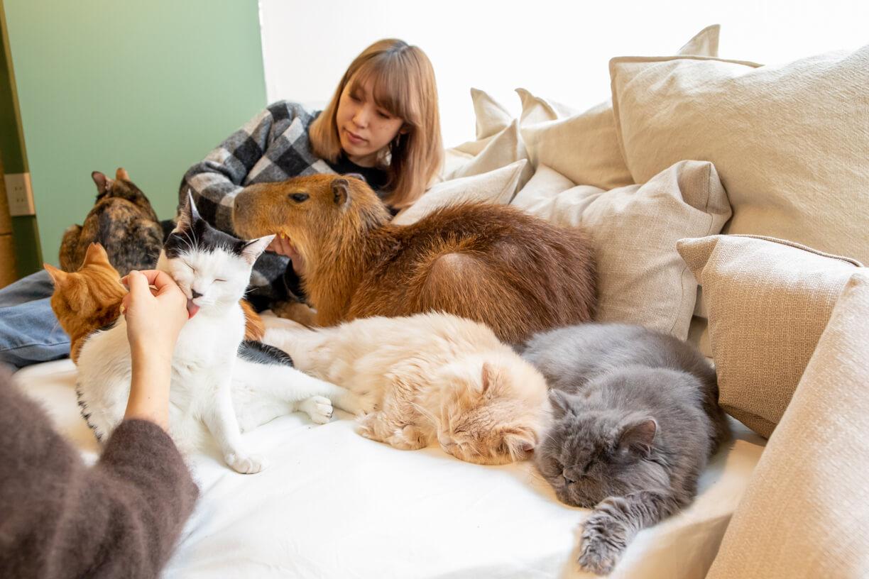 Capy Neko Cafe Japan S First Cat And Capybara Cafe Opens In Tokyo Moshi Moshi Nippon もしもしにっぽん