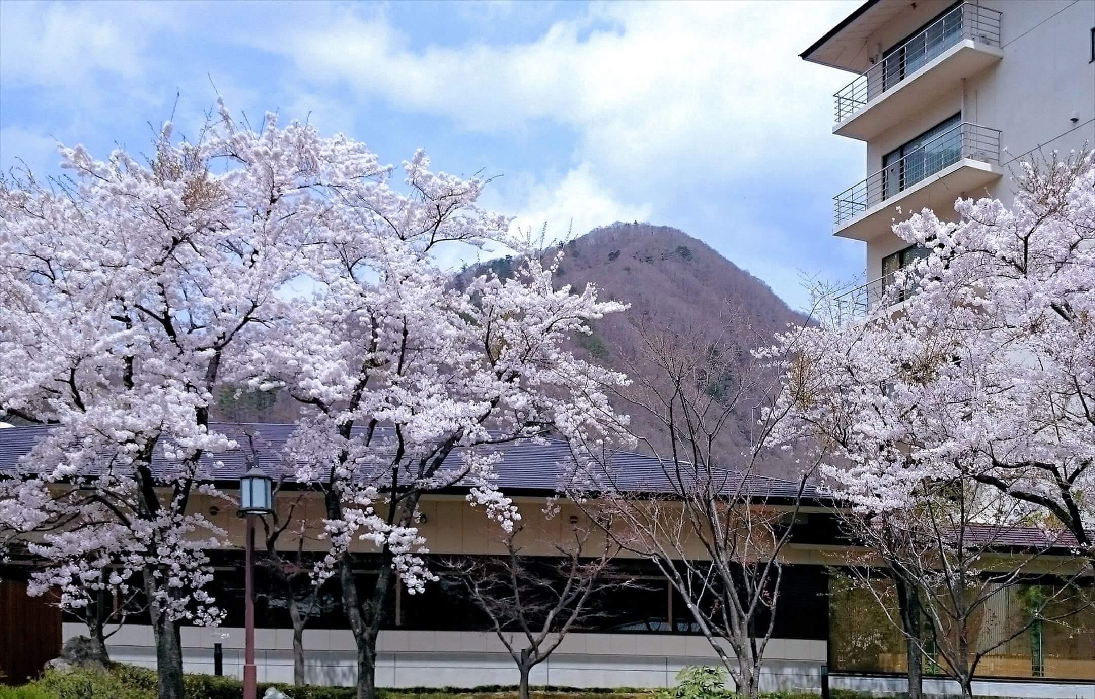星野リゾート桜_星野集团櫻花_ Hoshino Resorts Sakura