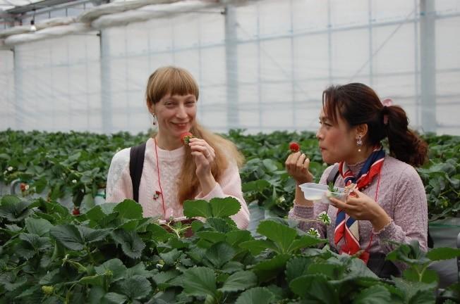 Chiba Strawberries千葉県苺_千葉草莓__1