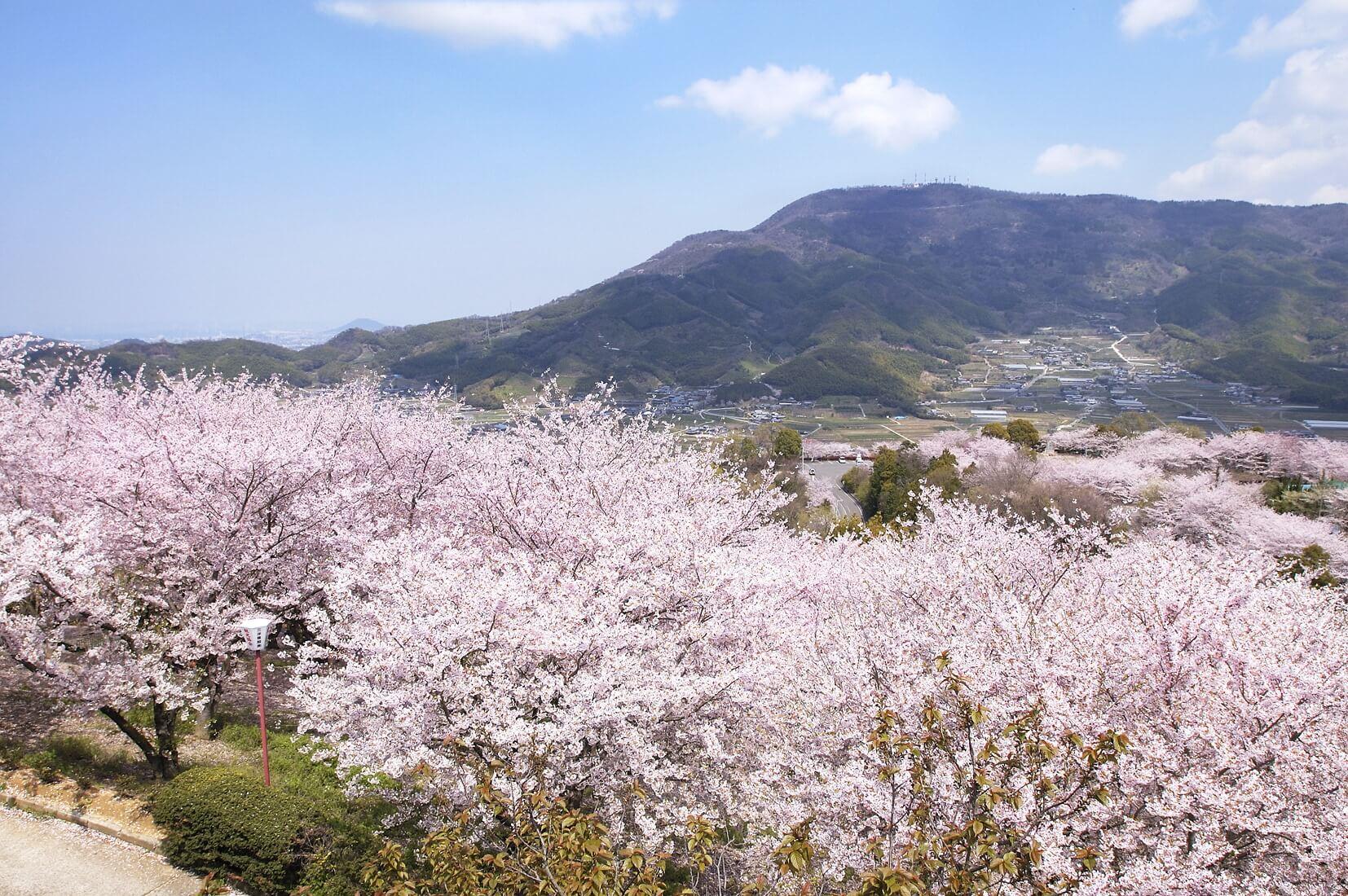 香川県高松市 香川縣高松市 Takamatsu City, Kagawa Prefecture_18