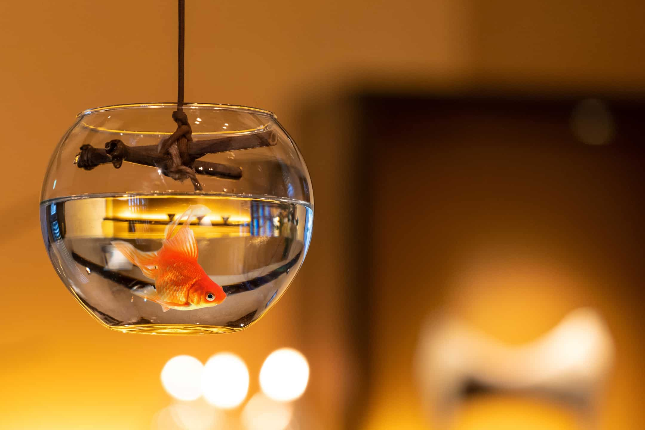 %e6%98%9f%e3%81%ae%e3%82%84-%e9%87%91%e9%ad%9abar-hoshinoya-goldfish-bar-%e6%98%9f%e9%87%8e%e9%9b%86%e5%9b%a2_5-2