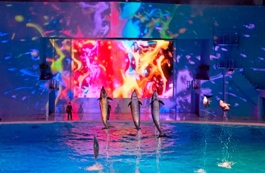 シーパラの夏 2020水族館 Aquarium3