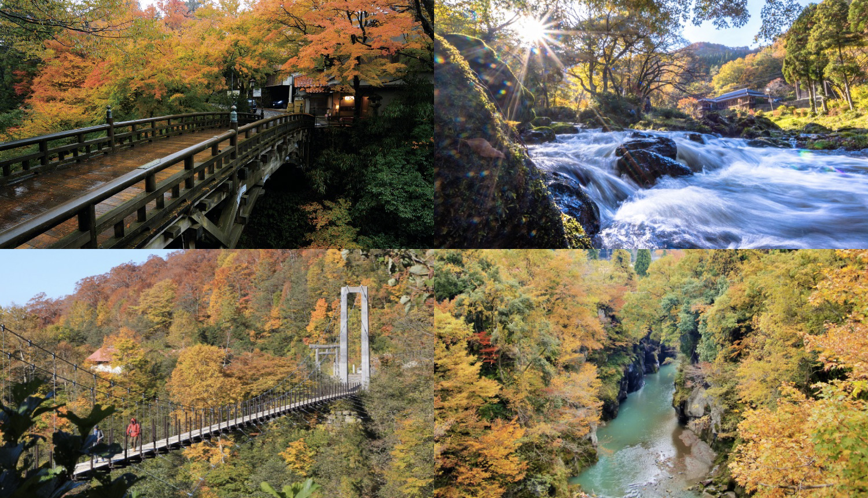 加賀 紅葉スポット-Kaga-Autmn-秋天的樹葉