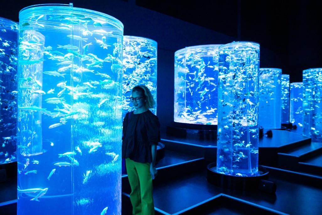 アートアクアリウム 日本橋美術館 Art Aquarium 6