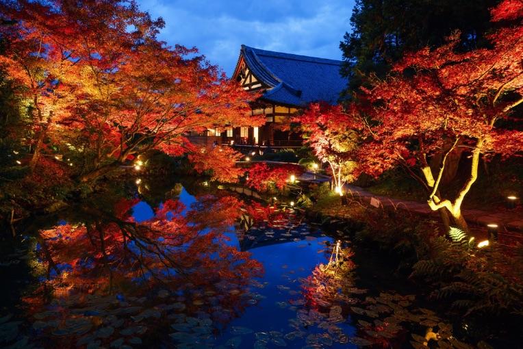 金戒光明寺 イルミネーション京都 光雕投影 Kyoto Konkai-Komyoji temple illumination