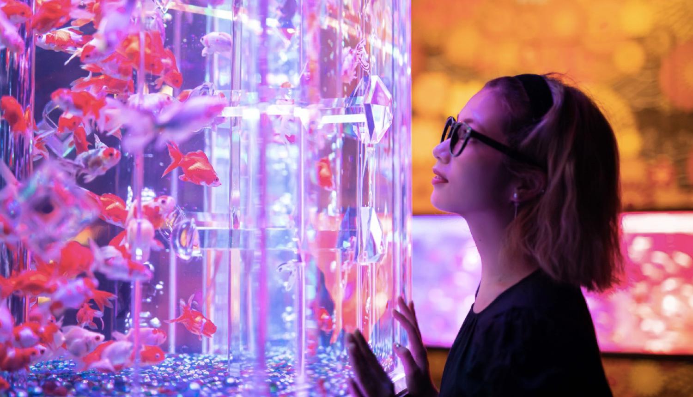 アートアクアリウム-日本橋美術館-Art-Aquarium-1