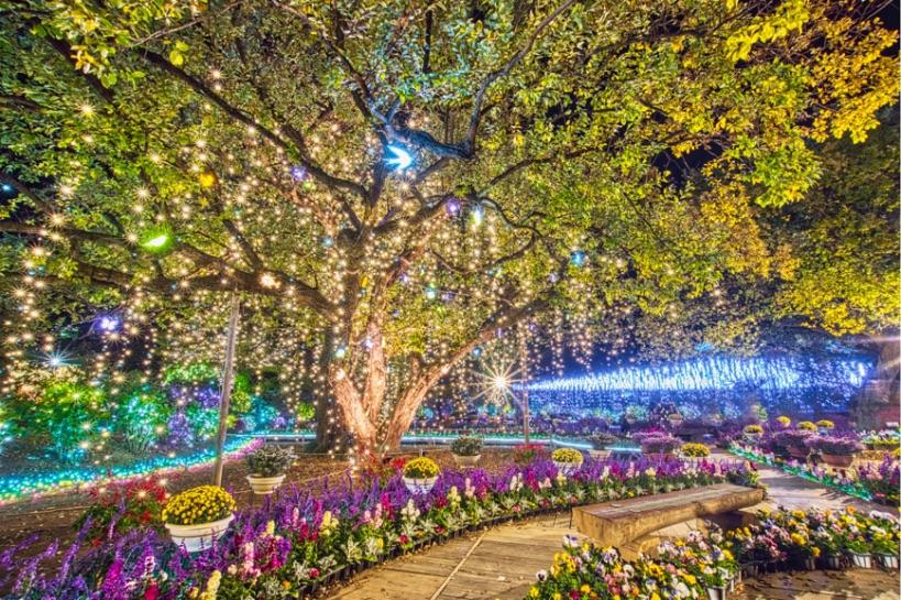 栃木県あしかがフラワーパーク イルミネーション 光雕投影 Tochigi illumination18
