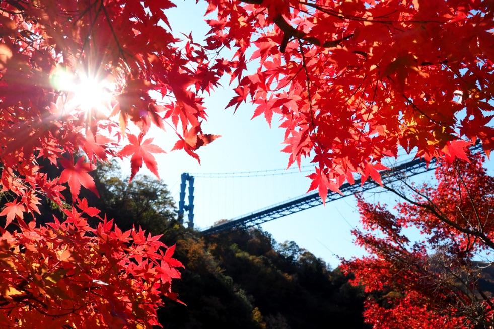 茨城県紅葉 Ibaraki travel 茨城旅行