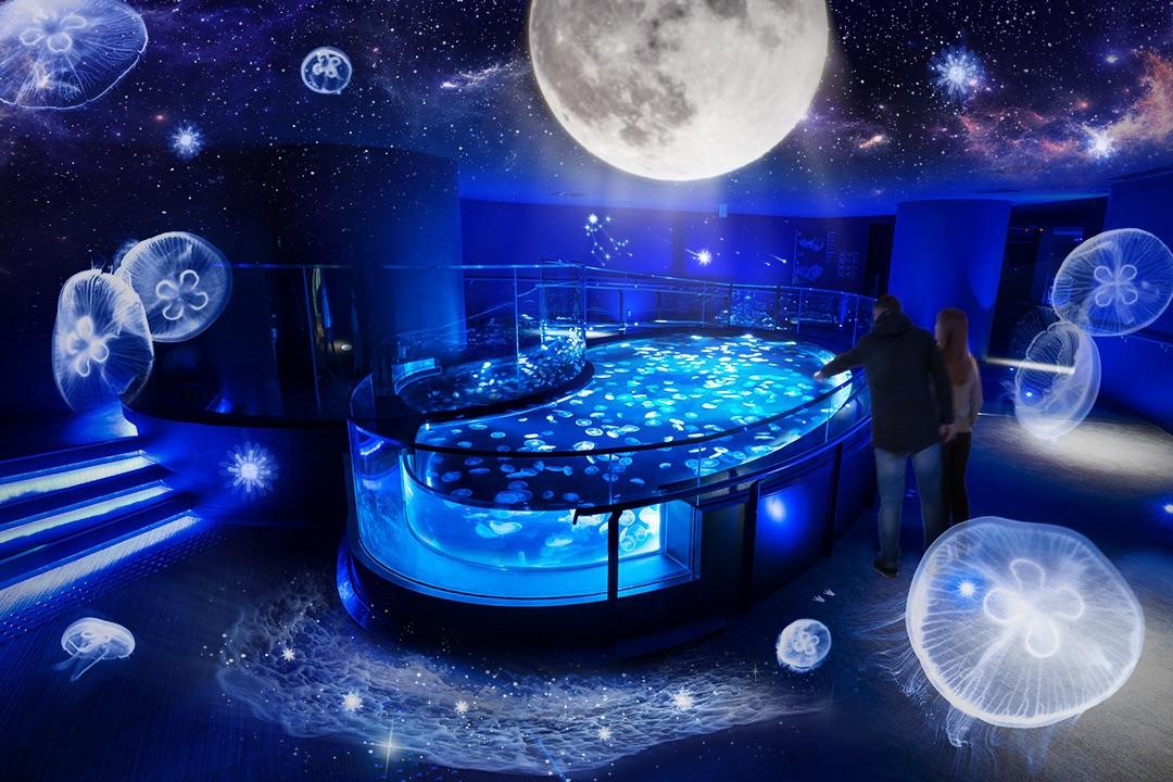 すみだ水族館 月とクラゲ Sumida Aquarium