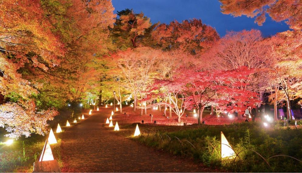 国営武蔵丘陵森林公園 ライトアップ-Saitama-illumination-在埼玉光雕投影
